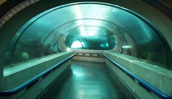 Tunel del Acuario nacional. Santo Domingo, Republica