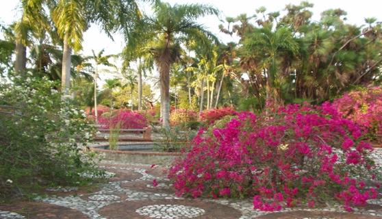 Plantas con flores trinitarias del jardin botanico jardin for Al jardin de la republica lyrics